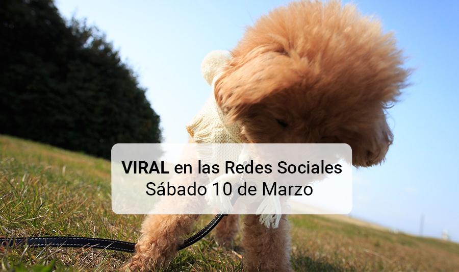 Viral: FOTO: Perro con cara de persona causa furor las Redes Sociales