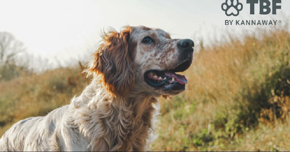 Empresas: Kannaway se asocia con TBF para ofrecer una nueva línea de productos para mascotas