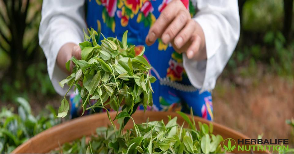Empresas: Herbalife Nutrition recibe el Premio al Liderazgo en la Industria Herbal