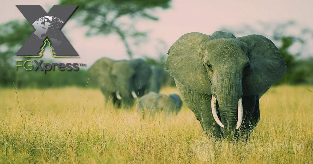 Importante avance de ForeverGreen en África